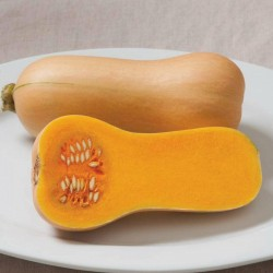 Small Fruited, Mini Butternut Squash Seeds Seeds Gallery - 3