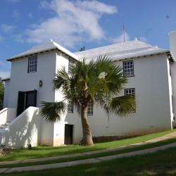 Semillas de Bermuda Palmetto  - 3