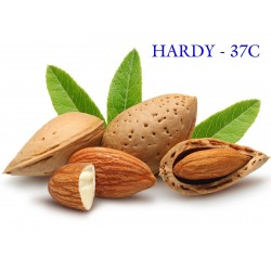 Sweet Almond Seeds (Prunus amygdalus)  - 6