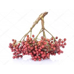 Japanese Pepper - Sanshō Seeds (Zanthoxylum piperitum)  - 2