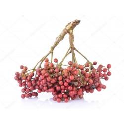 Japanischer Pfeffer Samen (Zanthoxylum piperitum)  - 2