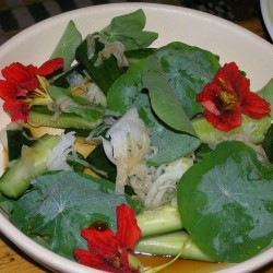 Sementes de Cinco-chagas comestível (Tropaeolum majus)  - 3