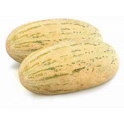 Semi di melone Mirzachul, Gulabi, Torpedo Seeds Gallery - 6