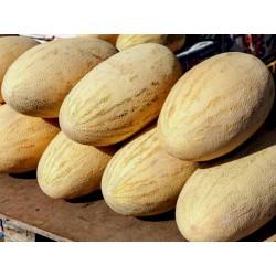 Mirzachul, Gulabi, Torpedo Melon Seeds Seeds Gallery - 4