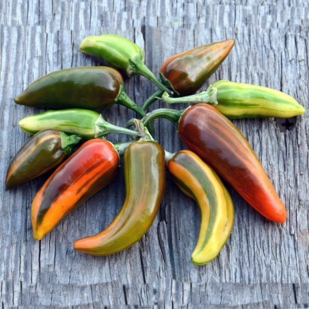 FISH Hot Chilli Pepper Seeds