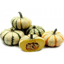 LIL' PUMP-KE-MON Pumpkin Seeds Seeds Gallery - 4