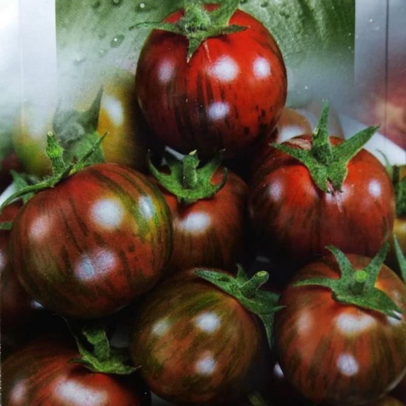 Black Vernissage Tomato Seeds Seeds Gallery - 6