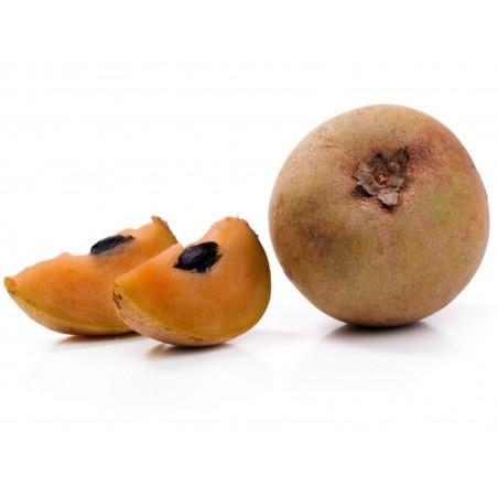 Sapotillträd, Sapotillplommon, Tuggummiträd Frön