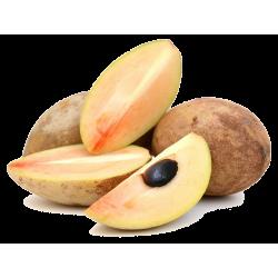 Semillas de Manilkara zapota, Chicle  - 4