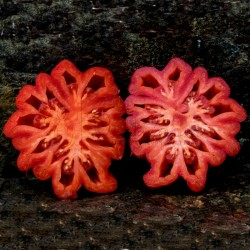 Semillas de tomate Pink Accordion Seeds Gallery - 6