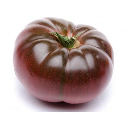 Graines Tomate ancienne noire 'Cherokee purple'