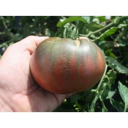 Sementes Tomate Cherokee roxo Seeds Gallery - 2