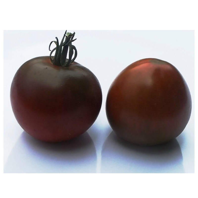 Black Prince Tomato Seeds Organically Grown  - 4