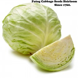 Futog Cabbage Seeds Heirloom 400 seeds  - 3
