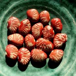 Σπόροι φασόλια ζέβρα (Phaseolus lunatus)  - 2