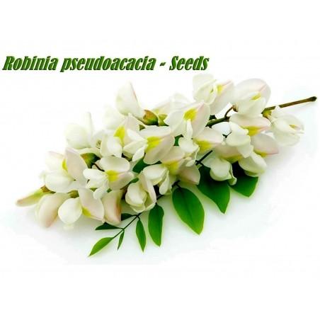 Robinia trädväxt Frön (Robinia pseudoacacia)