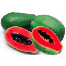 Red Papaya Seeds Rare (Carica papaya)  - 4