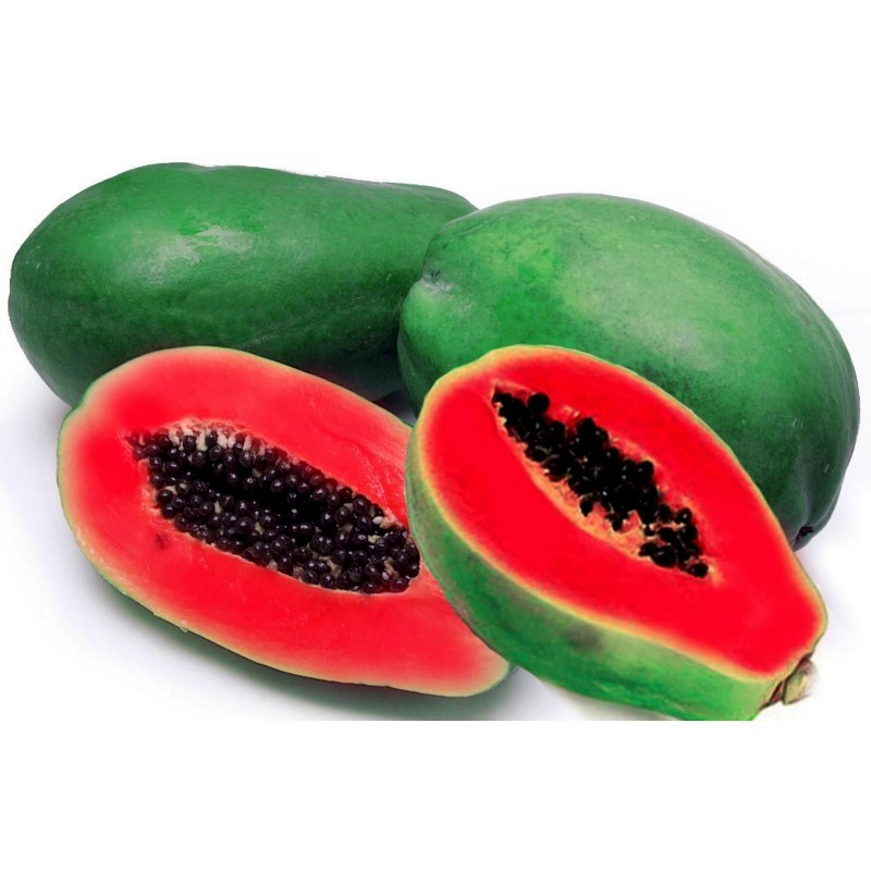 Graines de Papayer rouge - Rare (Carica papaya)  - 4