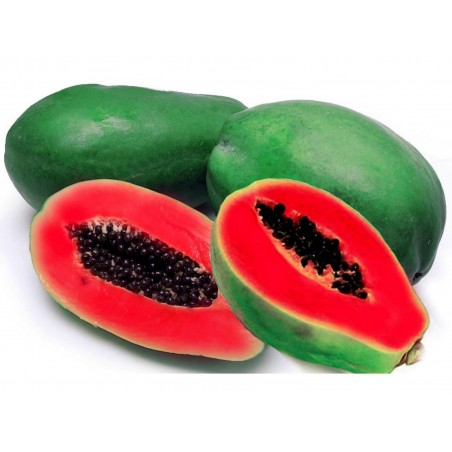 Graines de Papayer rouge - Rare (Carica papaya)