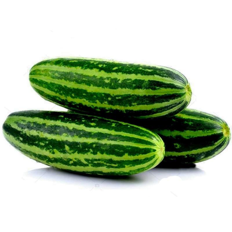 Semillas de melón Dulce Almizcle Tailandés Seeds Gallery - 8