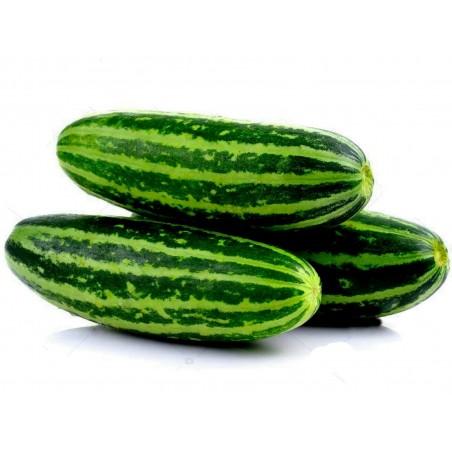 Seme Tajlandske dinje Thai Musk Melon