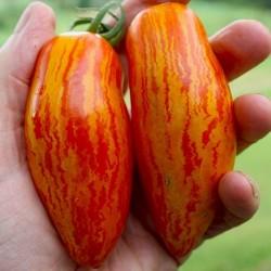 Graines de tomate SWEET CASADAY  - 1