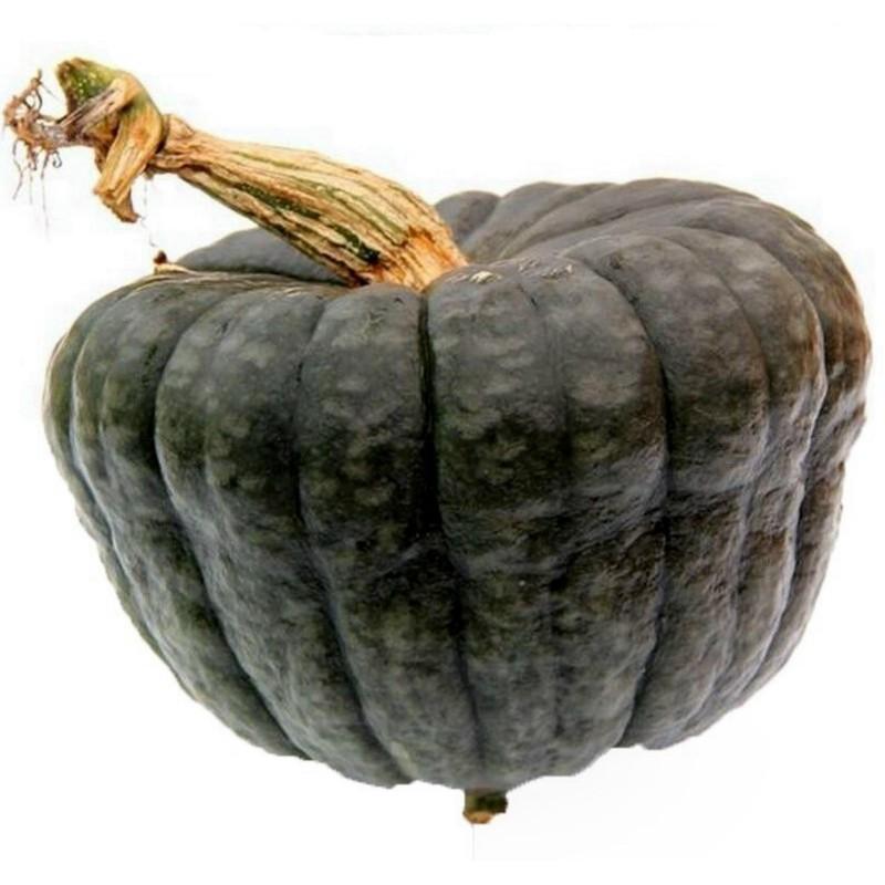 Pumpkin seeds Queensland Blue Seeds Gallery - 6