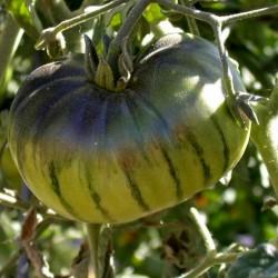 ARBUZNYI (watermelon) Big Green Tomato Seeds Seeds Gallery - 3