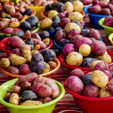 Salute bunte Kartoffelsamen