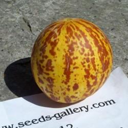 Graines Melon tigre (Melon d'Arménie)  - 6
