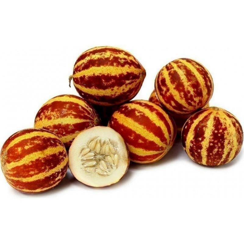 Armenian Tigger Melon Seeds  - 7