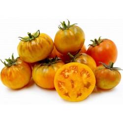 Orange Purple Smudge Tomato Seeds  - 1