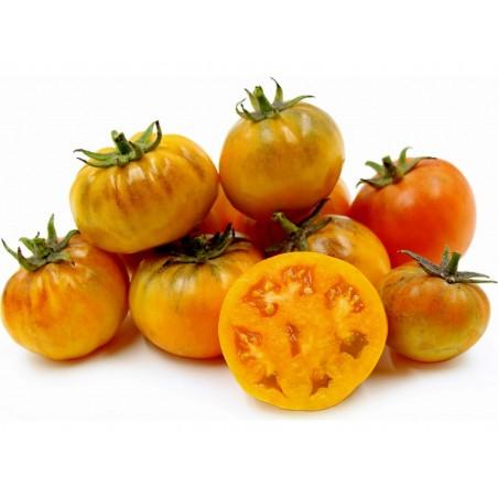 Orange Purple Smudge Tomato Seeds