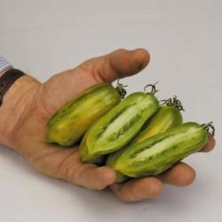 Ντομάτα σπόρος Πράσινο λουκάνικο (Green Sausage)  - 4