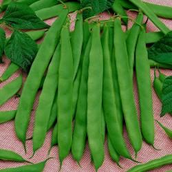 Pole Beans Seeds Cer Starozagorski  - 1