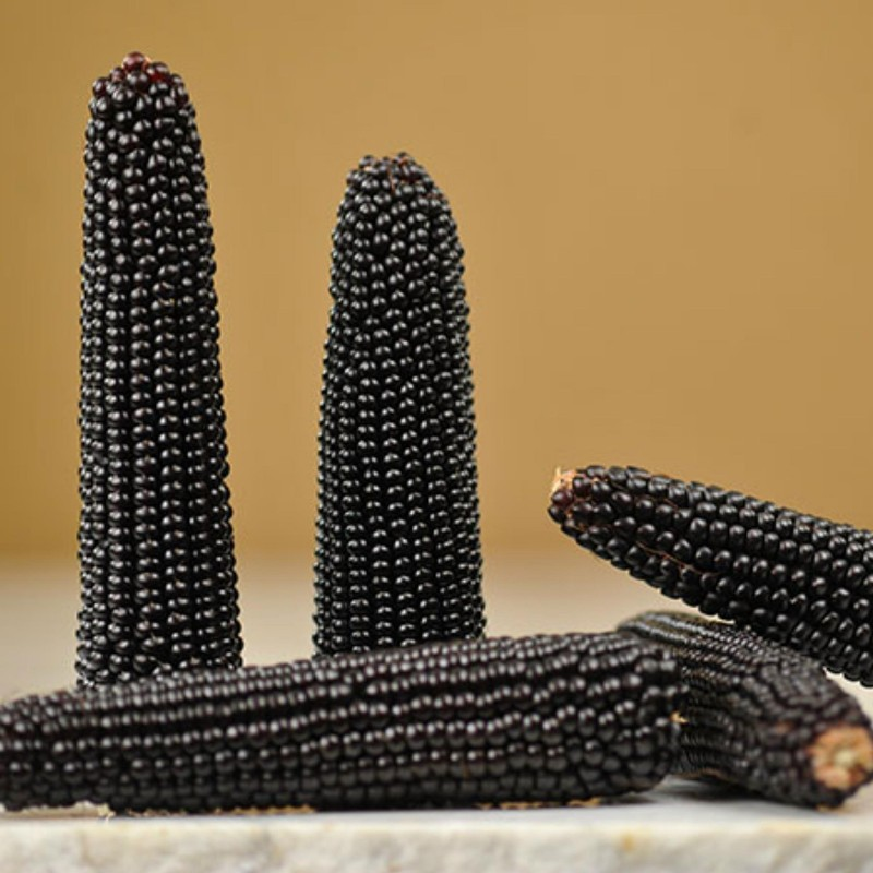 Black Popcorn Corn Dakota Seeds Seeds Gallery - 3