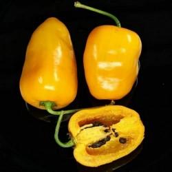 Semi di peperoncino Rocoto Manzano Cusco Cuzco  - 1
