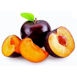 Sweet Black Plum BLACK BEAUTY Seeds  - 3
