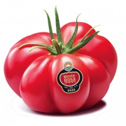 Monte Rosa Gerippte Pink Tomatensamen Seeds Gallery - 8