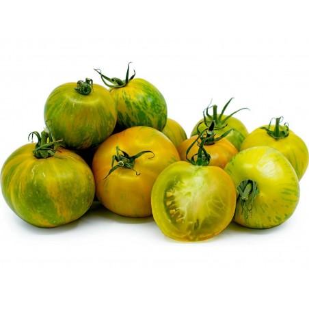 Graines de tomate Zèbre vert (Green Zebra)