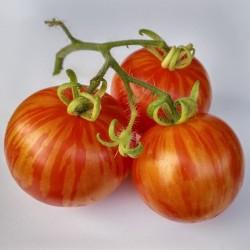 Graines de tomate Tigerella  - 1