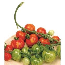 Semillas de tomate Tigerella  - 2