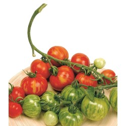 Tigerella Tomate Samen  - 2