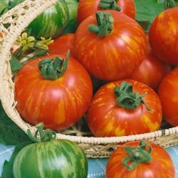 Sementes de tomate Tigerella  - 3