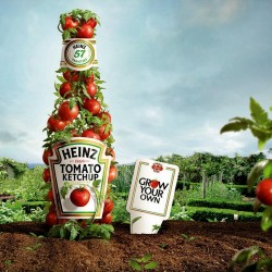 Sementes de tomate HEINZ 1350