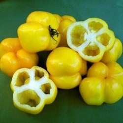 Yellow Stuffer (Tomatenpaprika) Tomaten Samen  - 2