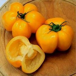 Sementes de tomate Yellow Stuffer  - 4