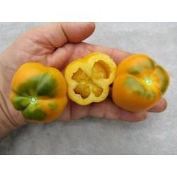 Yellow Stuffer Tomato Seeds  - 7
