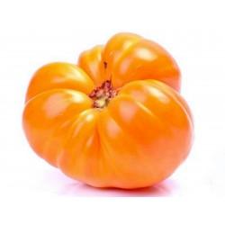 Semi di pomodoro Cuor Di Bue Arancione Seeds Gallery - 3