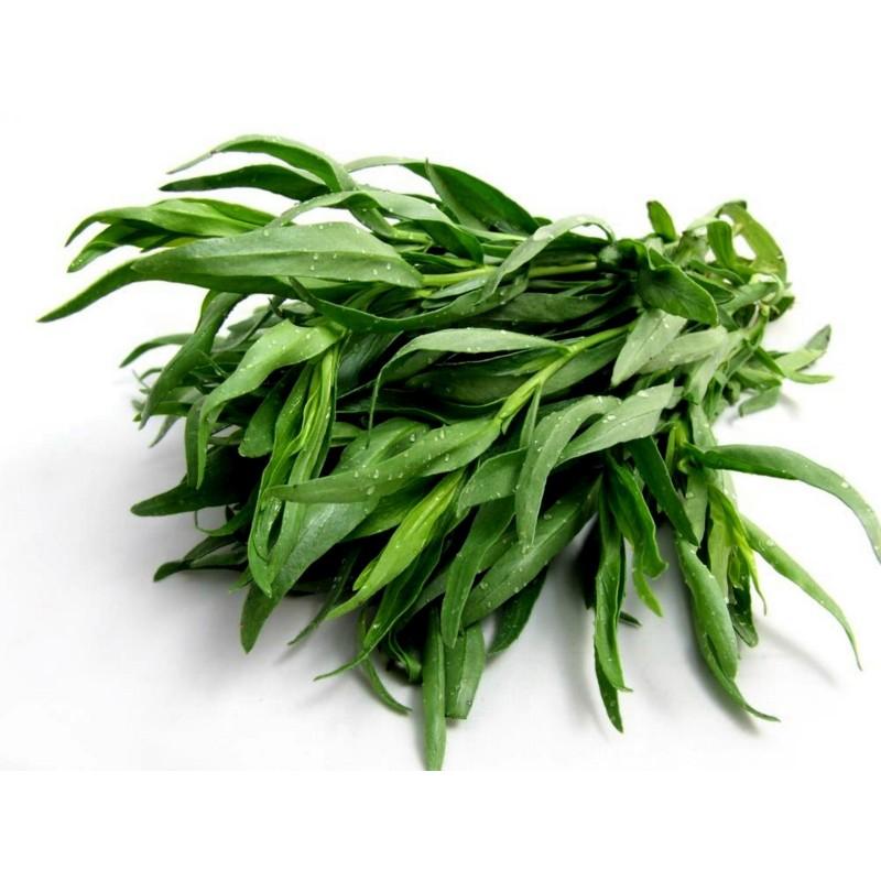 Esdragon, Kejsarsallat rysk Frön (Artemisia dracunculus)  - 2
